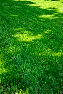 backyard drainage solutions in milton ga